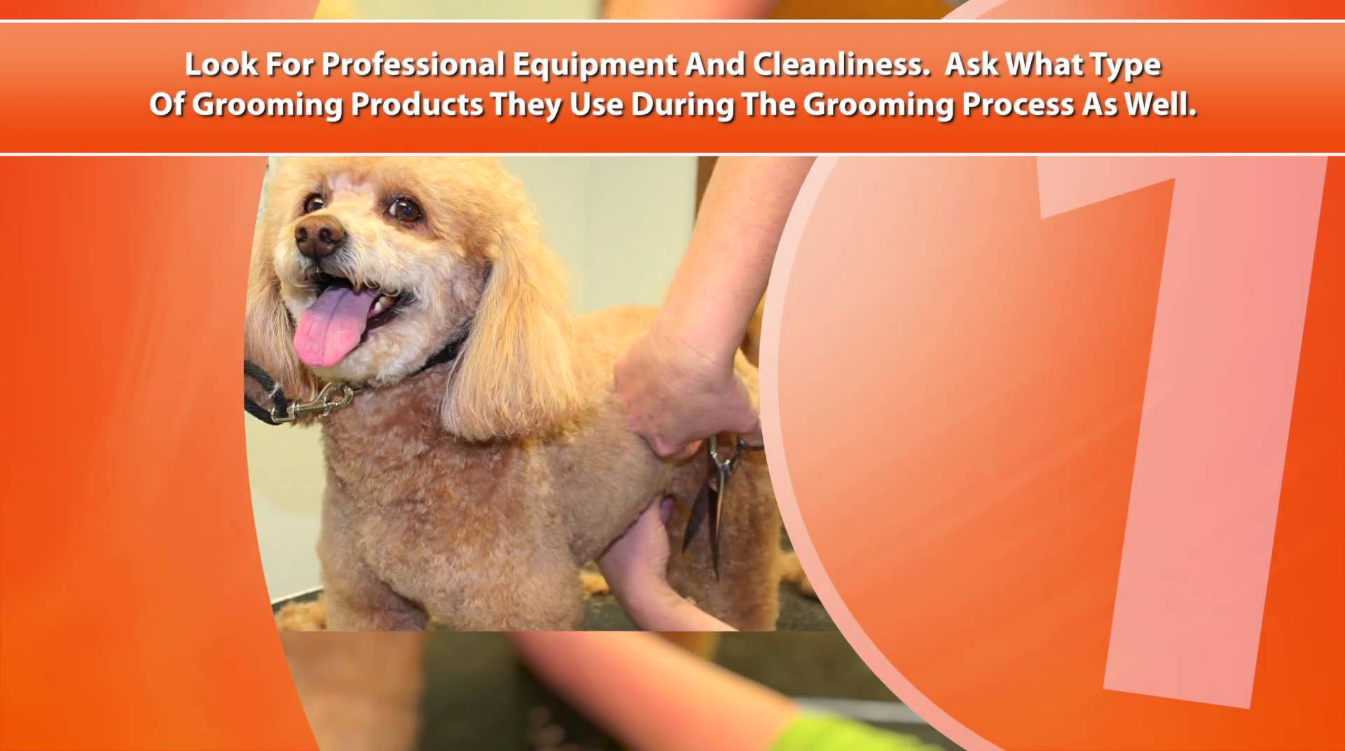 Pet Grooming – Marketing Video for Dog and Cat Groomers